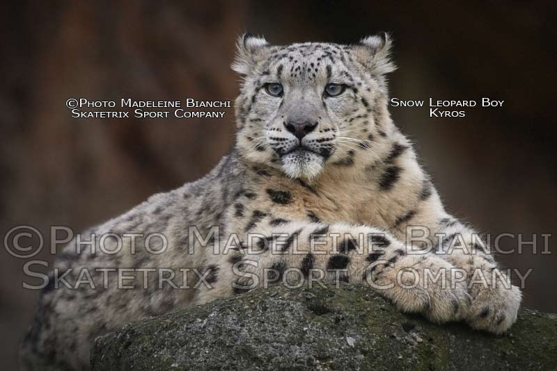 May 05 - 2016 - Snow Leopard KYROS