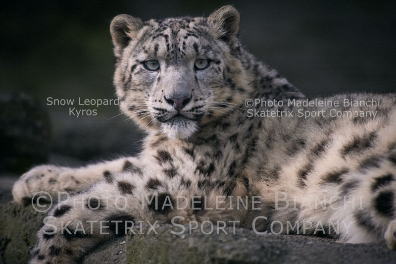 May 11 - 2016 - Snow Leopard KYROS