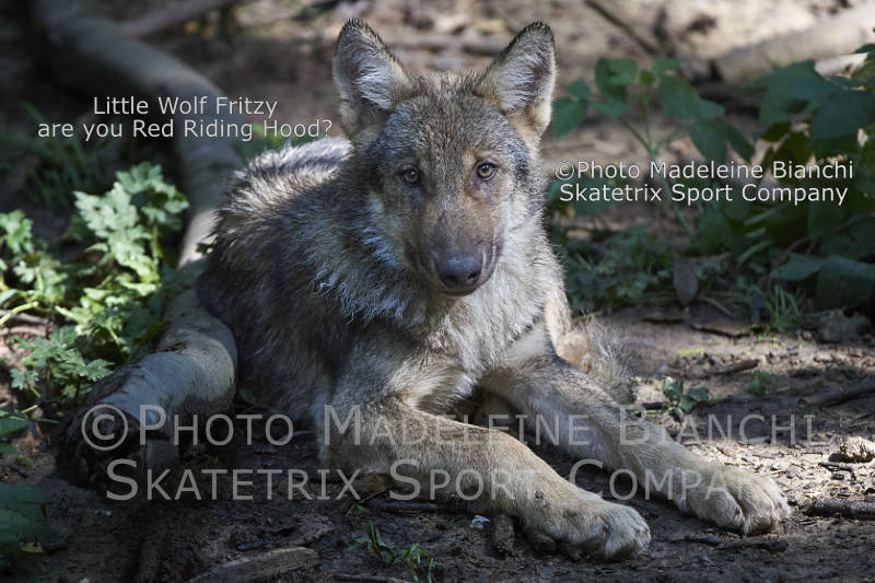 Oct 22 - 2016 - Little Wolf FRITZY - the cute forest dweller!