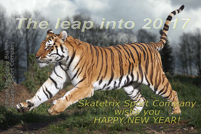 Dec 31 - 2016 - Bengal Tiger CHANDRA - the leap into 2017!