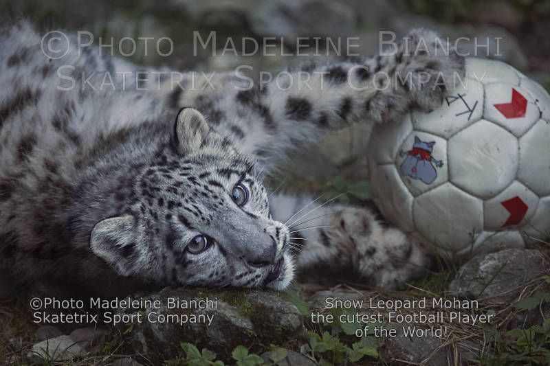 Snow Leopard Baby MOHAN - the bewitching smile of a natural talent!