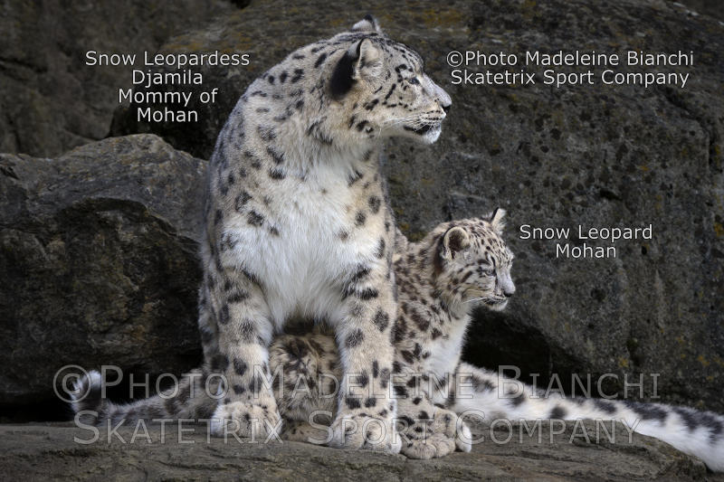 Little Snow Leopard Boy MOHAN and Mommy DJAMILA - today, I will be a good boy!!