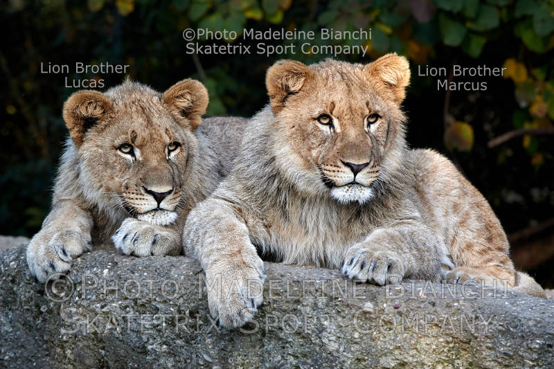 Little Lion Brothers MARCUS and Lucas - An eyesore of European politics!