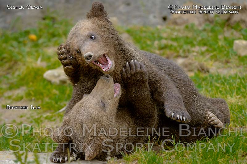 Brown Bear Cubs OLAGA and ILJA